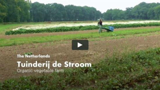 tuinderij de stroom - video cover_02